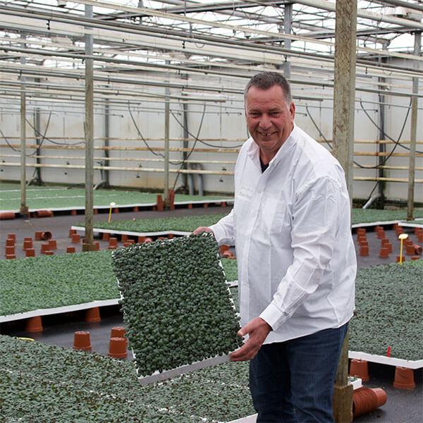Stars-Plant Henk Leenheer